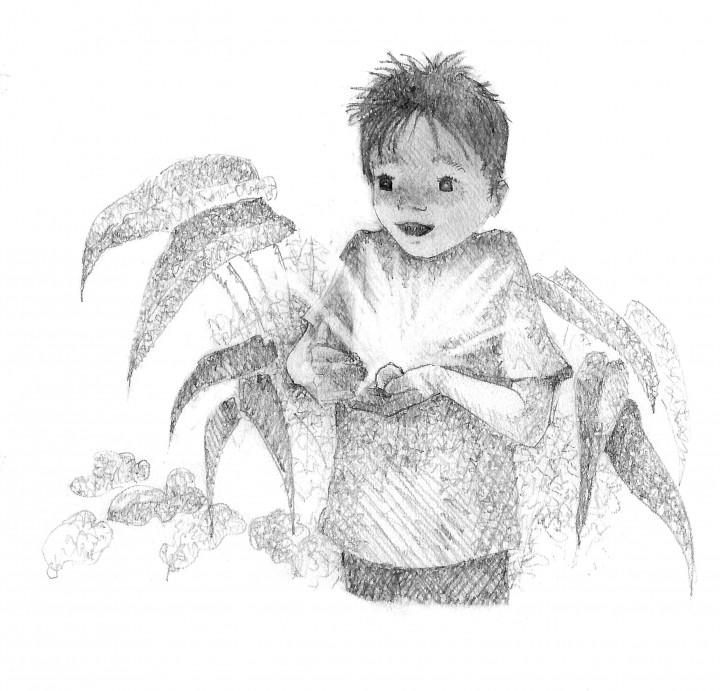 The Secret Rescuers: The Baby Firebird   Paula Harrison