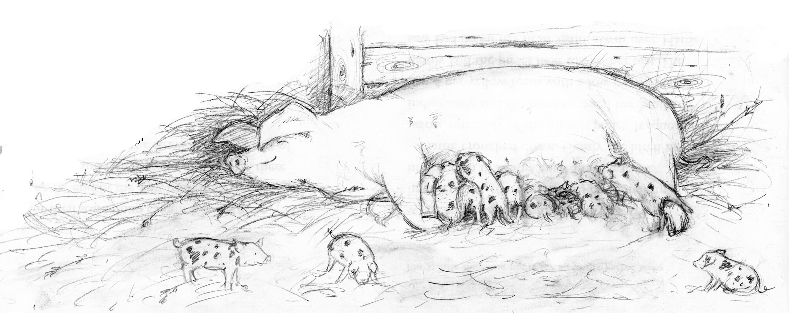 A Piglet Called Truffle - Ellie Snowdon